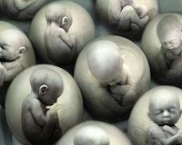 cloning2.jpg