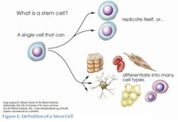 stemcellbasics.png